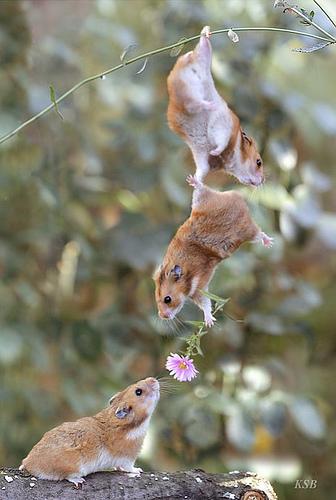 Ratones entregando flores